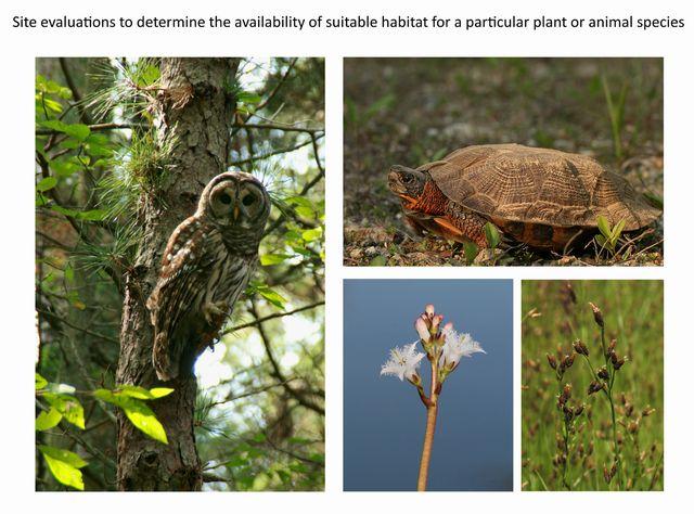 Habitat assessment page.jpg